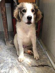 Hundemädchen Ella wünscht