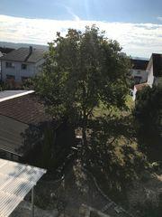 Brennholz Nussbaum an Selbstfäller abzugeben