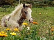 Ponys von Change of Faith