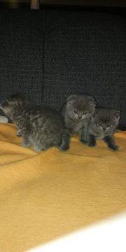 kleine süsse kitti