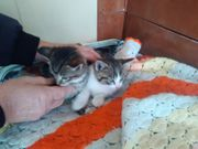 süße katzchen