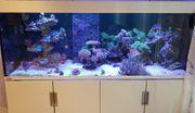 Eheim Incpiria Marine 500 Meerwasseraquarium