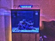 Meerwasseraquarium 150 Liter