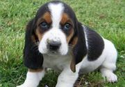 Suche Mischlingswelpen oder junghund günstig