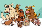 Whatsapp Gruppe für Hunde